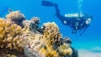 Duiken met dolfijnen in Eilat