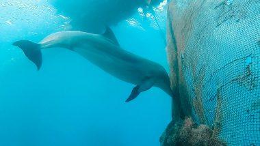 Duiken dolfijnen eilat