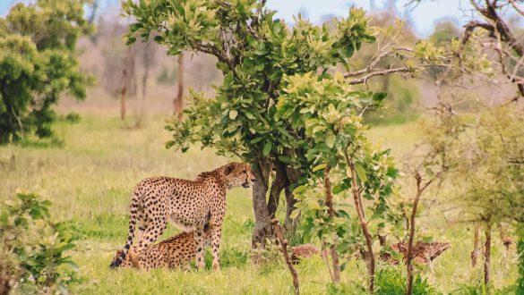 Reistijd en afstanden Kruger
