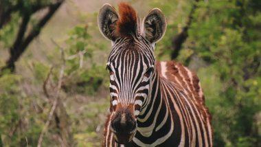 Dieren in het Krugerpark