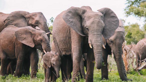 Kruger of Greater Kruger