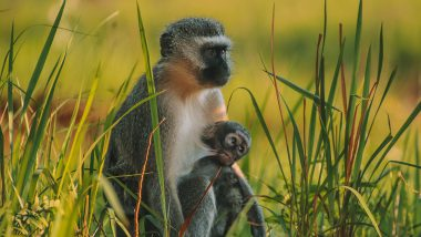 Mlilwane Wildlife Sanctuary Aap