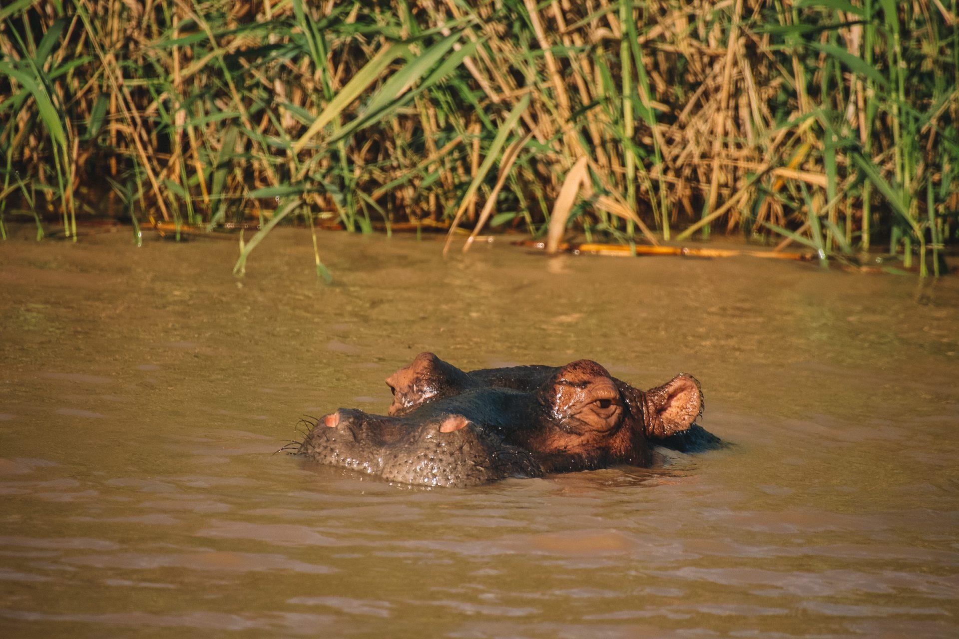 Hippo St. Lucia