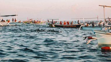 Dolfijnen spotten Lovina Beach