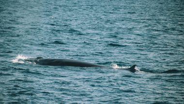 Whales Mirissa