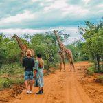 Giraffen encounter Hoedspruit