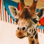 Antwerpse Zoo