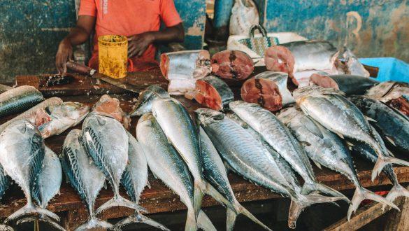 Negombo Vismarkt