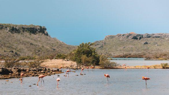 Landhuis Jan Kok - Flamingo's spotten