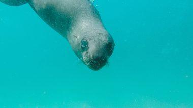 Duiken of snorkelen met zeehonden
