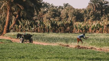 Mango plantage Nijlcruise