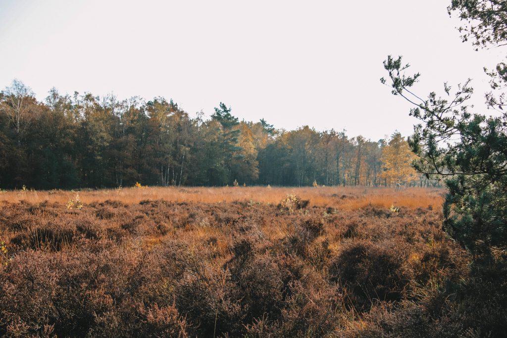 Vughtse Heide / Vughterheide
