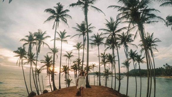 Coconut Tree Hill
