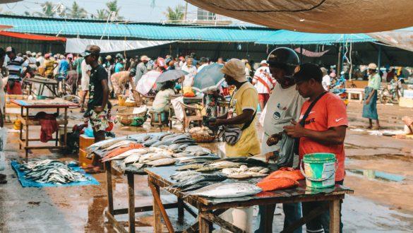 Negombo fish market