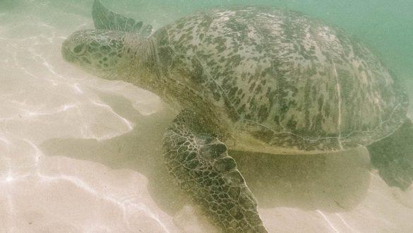 Turtle Unawatuna