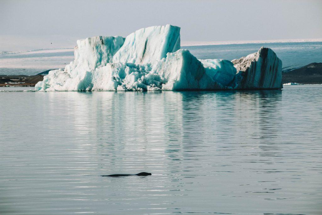 Jökulsárlón glacier lake Höfn