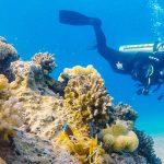 Diving Eilat